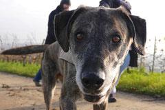 Bensheimer Weinlagen,T-Dogs,22.11.2014, Foto Nr.7
