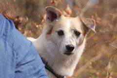 Taunushöhen,T-Dogs,18.4.2015 Foto Nr.7