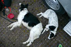 Rheinsteig Impressionen,T-Dogs, 27.07.2013 Bild Nr.15