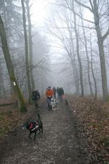 Gimbi,Staufen,Kaisertempel,T-Dogs,2.2.2014, Foto Nr.4
