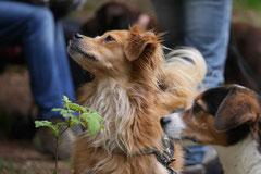 Rhön Frühlingserwachen,T-Dogs,3.+4.5.2014, Foto Nr.21