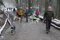 Schnuppertour Gimbacher Hof,T-Dogs,31.1.2015 Foto Nr.11