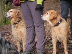 Irrbachquelle,T-Dogs,11.1.2015, Foto Nr.5