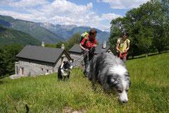 Schweiz-Tessin,T-Dogs,Mai 2014 Foto Nr.38