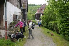 Rhön Frühlingserwachen,T-Dogs,3.+4.5.2014, Foto Nr.16