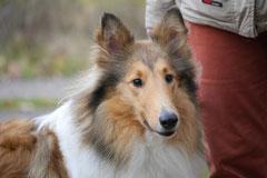 Rhön,Wellness+Wandern,T-Dogs,7.-9.11.2014, Foto Nr.10