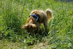 Bensheimer Weinlagen, T-Dogs, 5.5.13, Foto Nr.5
