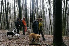 Irrbachquelle,T-Dogs,26.1.14, Foto Nr.4