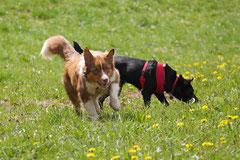 Mantrailing+Wandern Rhön,T-Dogs,30.4.-3.5.2015 Foto Nr.3