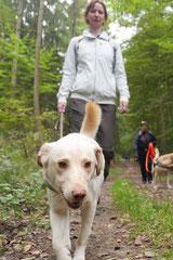 Kapersburg+Winterstein, T-Dogs, 5.10.2014, Foto Nr. 18