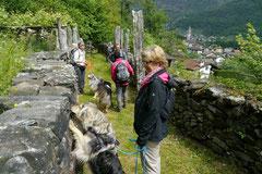 Schweiz-Tessin T-Dogs,Mai 2013, Foto Nr.25