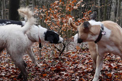 Schnuppertour Zacken,T-Dogs,17.1.2015, Foto Nr.11