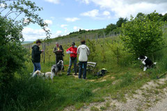 Klosterrunde, T-Dogs, 12.5.13, Foto Nr.14