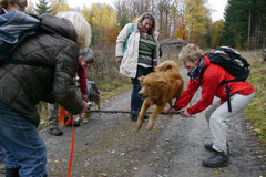 Weiltal - 11. November 2012