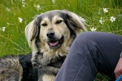 Schweiz-Tessin T-Dogs,Mai 2013, Foto Nr.42