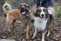 Herzberg und Limes,T-Dogs,6.12.2014, Foto Nr.6