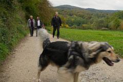 Bensheimer Weinlagen,T-Dogs,20.10.13, Foto Nr.1