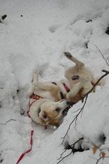Altkönig,T-Dogs,01.2.2014, Foto Nr.7
