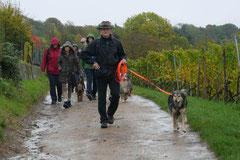 Bensheimer Weinlagen,T-Dogs,20.10.13, Foto Nr.9
