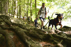 Schweiz-Tessin,T-Dogs,Mai 2014 Foto Nr.43