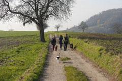 Bensheimer Weinlagen,T-Dogs,22.11.2014, Foto Nr.20