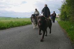 Rhön Frühlingserwachen,T-Dogs,3.+4.5.2014, Foto Nr.4