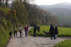 Bensheimer Weinlagen,T-Dogs,22.11.2014, Foto Nr.1