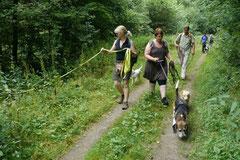 Wispersee, T-Dogs,28.07.2013, Bild Nr.1