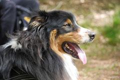 Rhön Frühlingserwachen,T-Dogs,3.+4.5.2014, Foto Nr.10