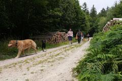 Nele Neuhaus Krimi Tour, T-Dogs, 5.7.14, Foto Nr.13