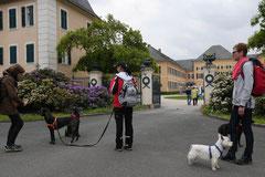 Himmelssteig+Mühlenweg,T-Dogs,10.5.14,Foto Nr.16