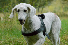 Hundeschulausflug-Sicher auf 4 Pfoten-28.9.13 Foto Nr.16