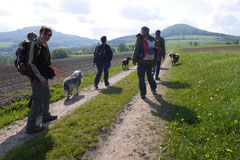 Rhön Frühlingserwachen,T-Dogs,3.+4.5.2014, Foto Nr.18