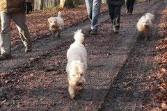 Schnuppertour Zacken,T-Dogs,17.1.2015, Foto Nr.6
