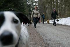 Altkönig,T-Dogs,01.2.2014, Foto Nr.4