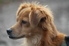 Bensheimer Weinlagen, T-Dogs, 25.1.14, Foto Nr.12