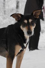 Nele Neuhaus Krimi Tour, T-Dogs, 1.2.2015 Foto Nr.11