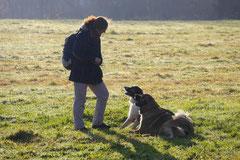 Weiltal, T-Dogs, 7.12.2014, Foto Nr.13