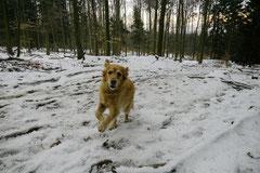 Altkönig,T-Dogs,01.2.2014, Foto Nr.3