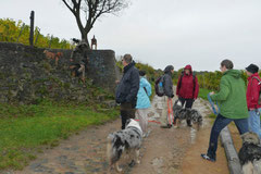 Bensheimer Weinlagen,T-Dogs,20.10.13, Foto Nr.13