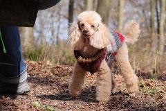 Taunushöhen,T-Dogs,18.4.2015 Foto Nr.8