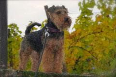 Bensheimer Weinlagen,T-Dogs,20.10.13, Foto Nr.14