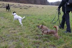 Schmitten zur Landsteiner Mühle,T-Dogs, 11.1.2014,Foto Nr.2