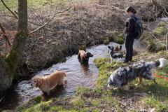 Drachenwege, T-Dogs, 8.3.2015 Foto Nr.27
