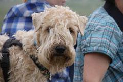 Klosterrunde, T-Dogs,16.5.2015 Foto Nr.12