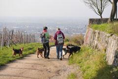 Bensheimer Weinlagen,T-Dogs,22.11.2014, Foto Nr.12