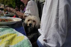 Grünwiesenweiher Welttierschutztag, T-Dogs, 4.10.2014 Foto Nr.22
