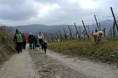 Bensheimer Weinlagen, März 2013 Foto Nr.7