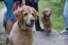 Nele Neuhaus Krimi Tour, T-Dogs, 5.7.14, Foto Nr.15