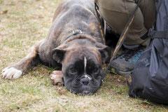 Lindenfels, T-Dogs, 7.3.2015 Foto Nr.20